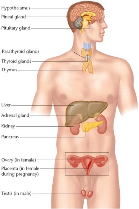 Болезни и симптомы полисмед
