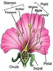 struktur bunga