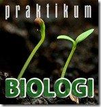 praktikumbio Jaringan pada tumbuhan (1) : Jaringan meristem