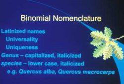 Daftar nama Latin tumbuhan di sekitar kita