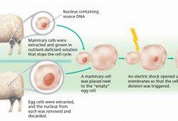 Bioteknologi (2) : Teknologi kloning untuk menciptakan makhluk hidup tanpa perkawinan + video