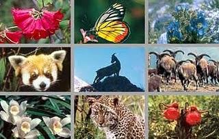 Keanekaragaman Hayati (Biodiversitas) 3