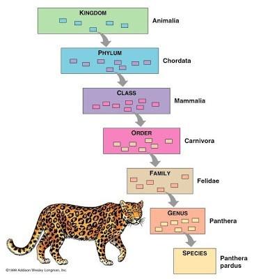 Macam klasifikasi makhluk hidup