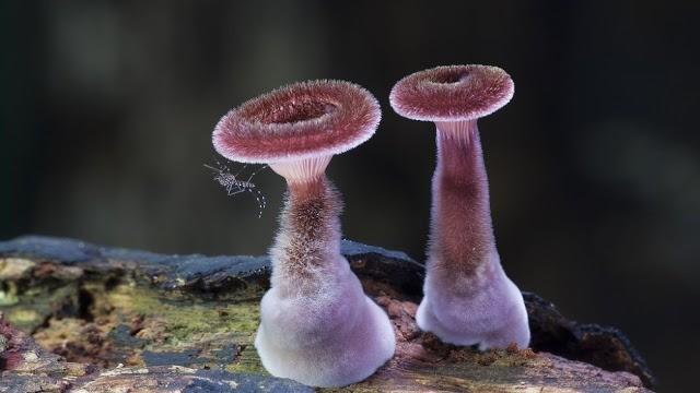 Foto-foto Jamur yang menakjubkan 2