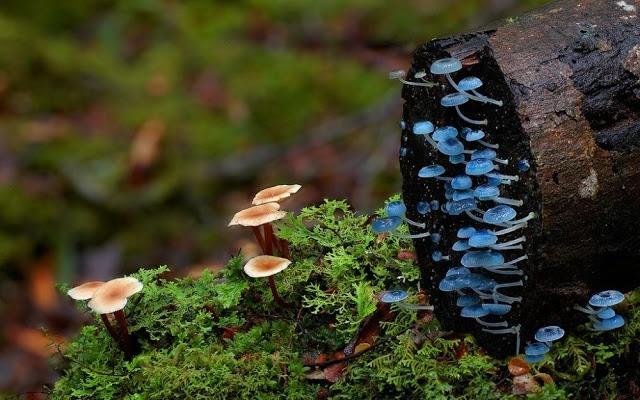 Foto-foto Jamur yang menakjubkan 4