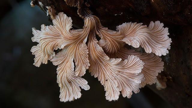 Foto-foto Jamur yang menakjubkan 20