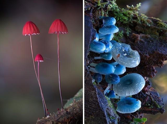 Foto-foto Jamur yang menakjubkan 21