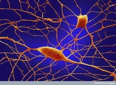 Foto-foto mikroskop elektron (2) : Sel dan jaringan makhluk hidup 8