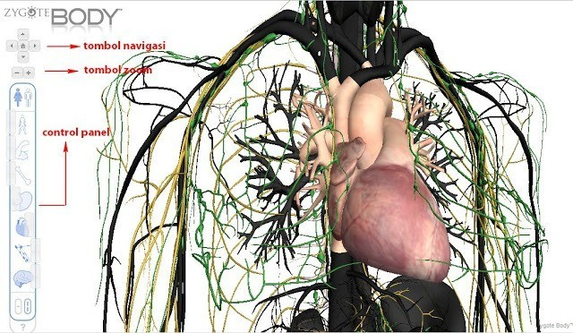Menjelajah Anatomi Tubuh dengan Google Body Browser 1