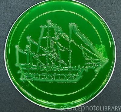 Seni melukis menggunakan mikroba 4