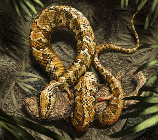 Fosil nenek moyang ular berkaki empat ditemukan 1
