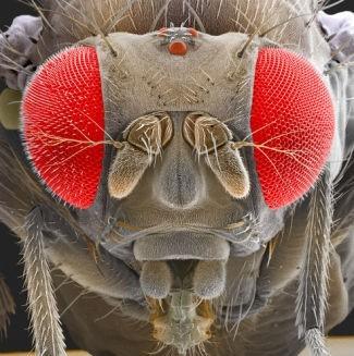 Foto-foto hasil scanning mikroskop elektron 12