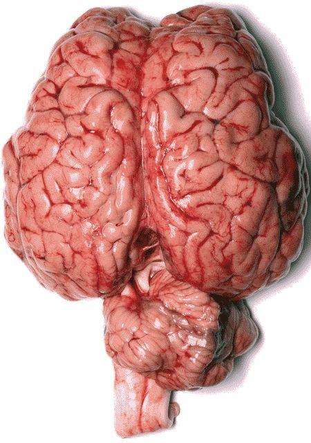 Inilah otak manusia 1