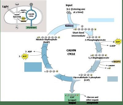 Fotosintesis (Anabolisme) 3