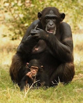 Cara reproduksi yang unik pada hewan 11
