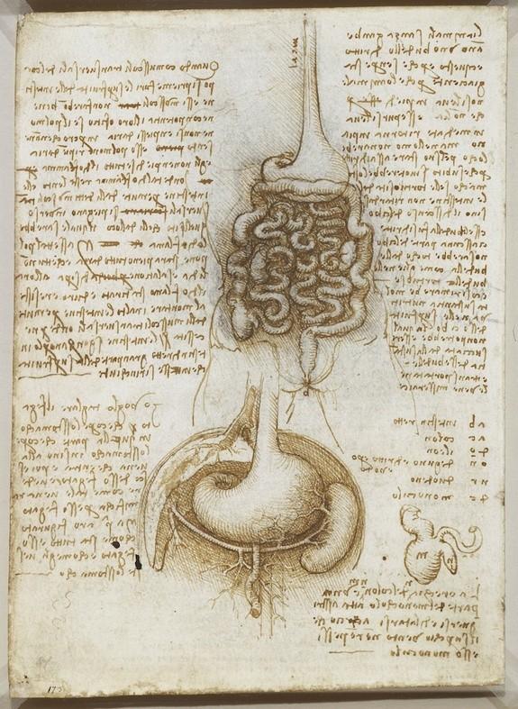 Lukisan Leonardo Da Vinci tentang anatomi manusia 2