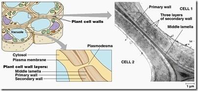 Struktur Sel