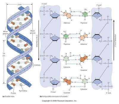 Kode genetik kedua yang tersembunyi ditemukan di dalam ADN 1