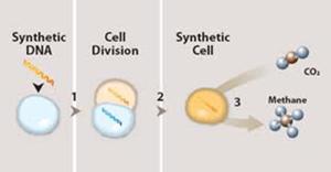 Sel hidup sintetis pertama berhasil dibuat 3