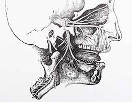 10 sisa organ yang tak berguna pada manusia 4