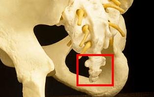 10 sisa organ yang tak berguna pada manusia 6