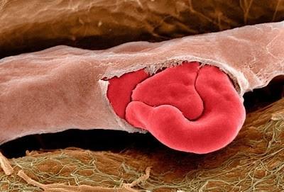 Foto-foto mikroskop elektron (1) : Sel dan jaringan makhluk hidup 9