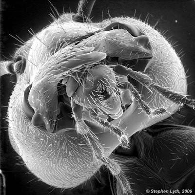 Foto-foto hasil scanning mikroskop elektron 17