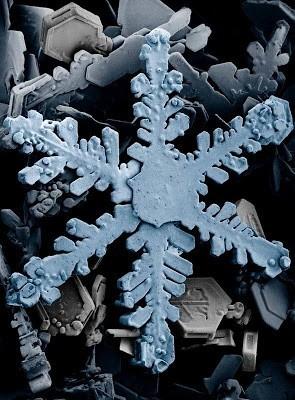 Foto-foto hasil scanning mikroskop elektron 18