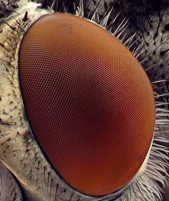 Foto-foto hasil scanning mikroskop elektron 21
