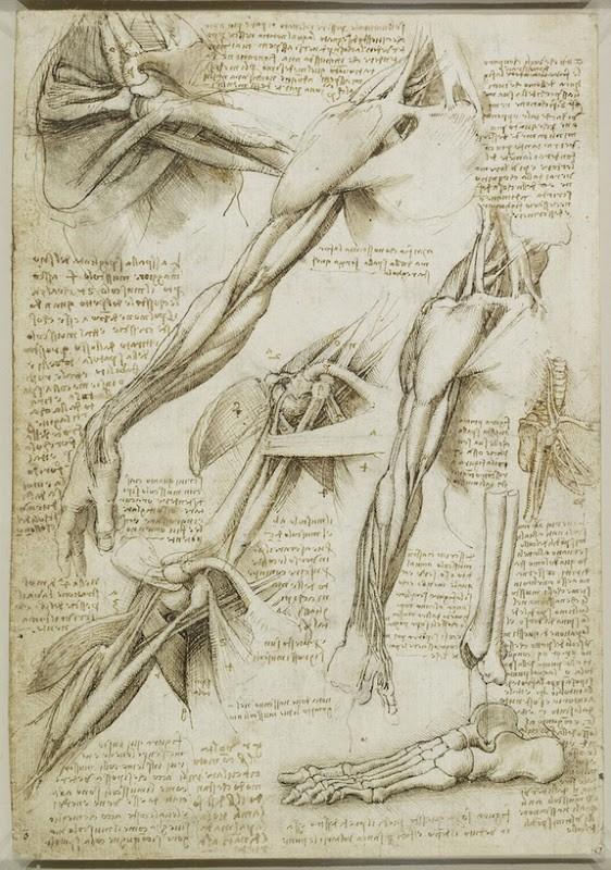 Lukisan Leonardo Da Vinci tentang anatomi manusia 8