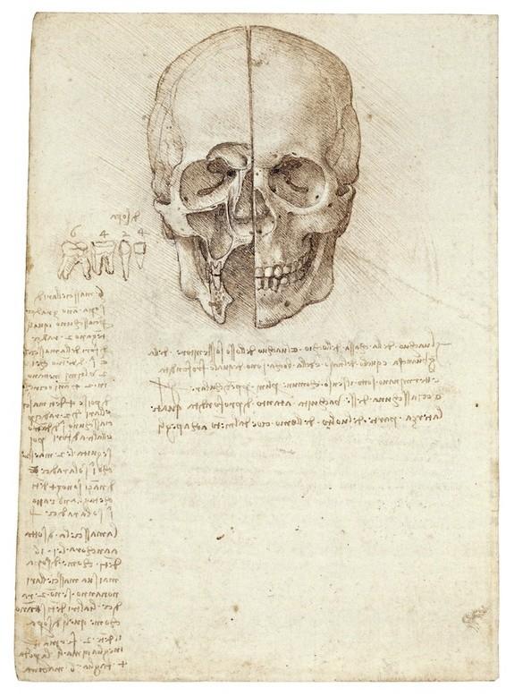 Lukisan Leonardo Da Vinci tentang anatomi manusia 9