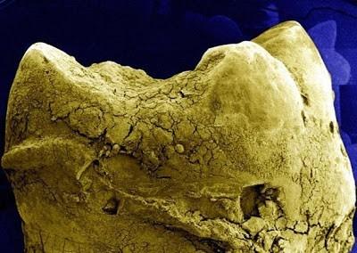 Foto-foto hasil scanning mikroskop elektron 26