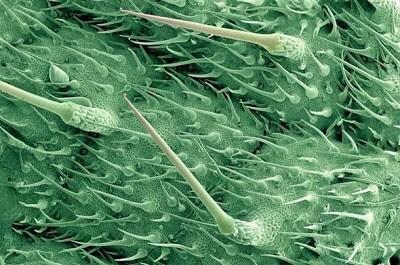 Foto-foto hasil scanning mikroskop elektron 27