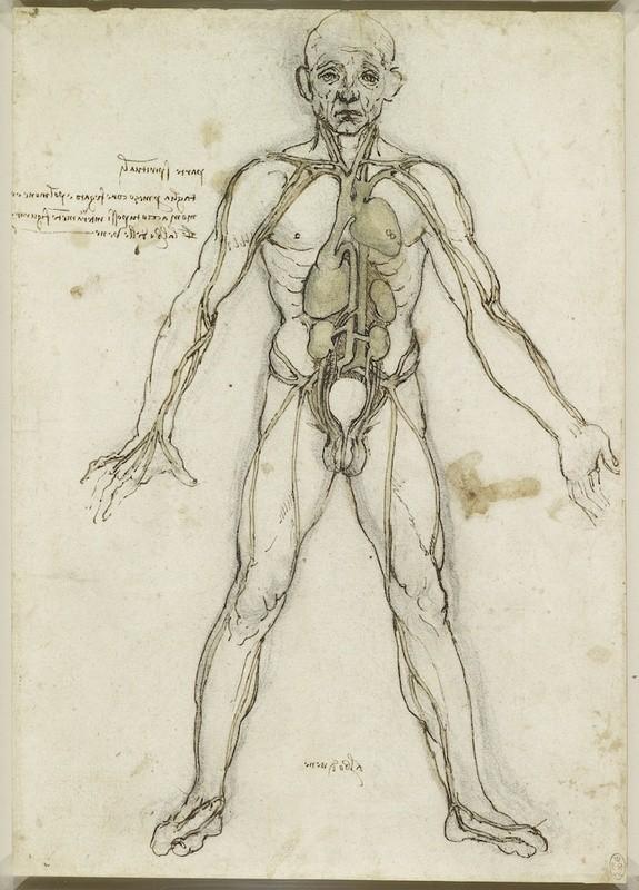 Lukisan Leonardo Da Vinci tentang anatomi manusia 10