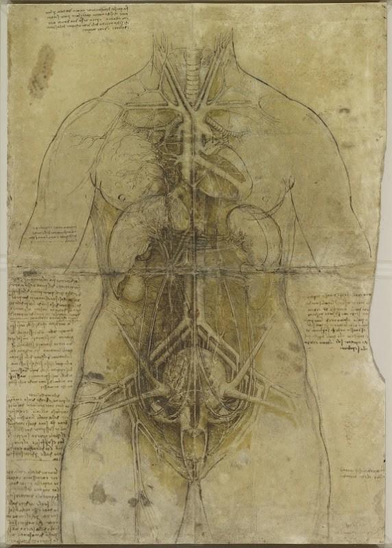 Lukisan Leonardo Da Vinci tentang anatomi manusia 11