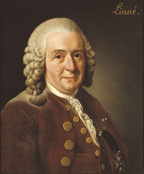 Carolus Linnaeus, pencipta binomial nomenklatur