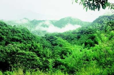 Keanekaragaman Hayati (Biodiversitas)