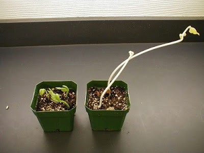 Pertumbuhan dan Perkembangan (1) : Pertumbuhan dan Perkembangan pada Tumbuhan