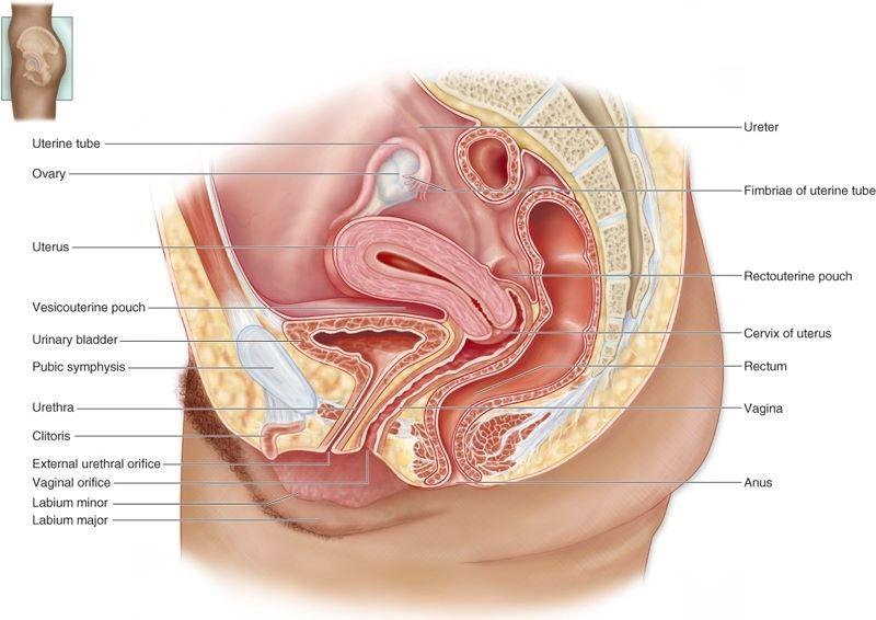 Sistem Reproduksi (2) : Reproduksi pada Manusia