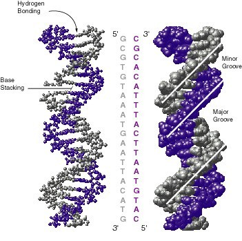 Watson dan Crick sang penemu struktur DNA (1)