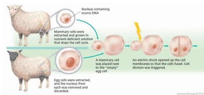 Bioteknologi (2) : Teknologi kloning untuk menciptakan makhluk hidup tanpa perkawinan + video 1