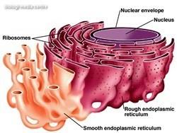 Organel-organel sel 3