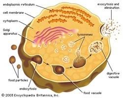 Organel-organel sel 7