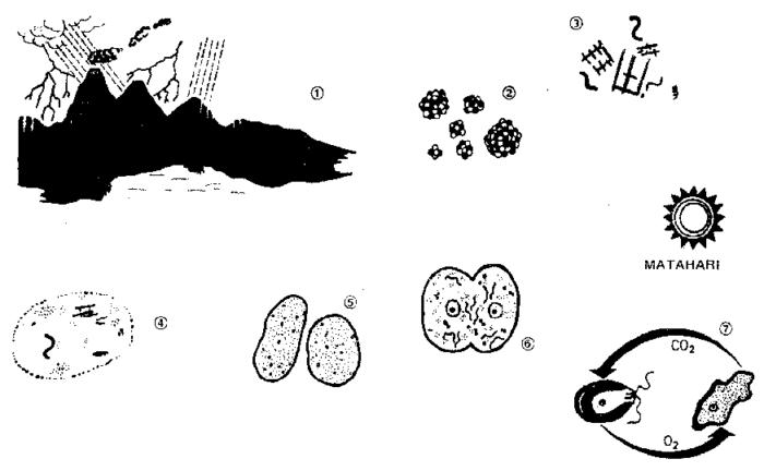 Asal-usul kehidupan : Evolusi Organik (2) 5