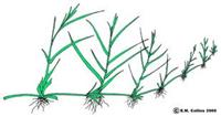 Reproduksi Vegetatif pada Tumbuhan