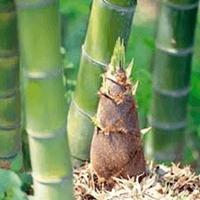 Reproduksi Vegetatif pada Tumbuhan 9
