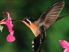 Reproduksi Generatif pada Tumbuhan