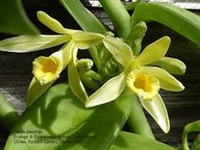 Reproduksi Generatif pada Tumbuhan 5