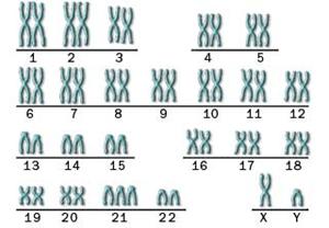 Mutasi 16