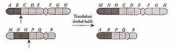 Mutasi 8
